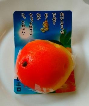 mango1.jpg